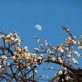 ~月と白梅~