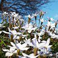 写真: ~花の丘~