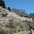 Photos: IMG_6053妙義山_艶桜_さくらの里
