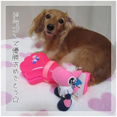 写真: 20111018 JURI