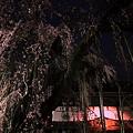 Photos: 桜巡礼`12'(身延、久遠寺、ラスト編)-1