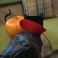 Photos: Ekkun&Pumpkin-Halloween2011