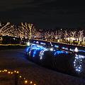 昭和記念公園のイルミネーション#5