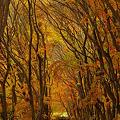 写真: 河内藤園の紅葉?