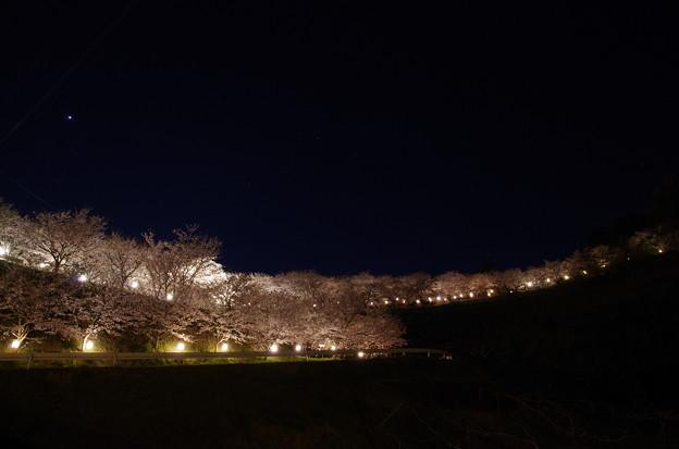 夜桜のライン♪