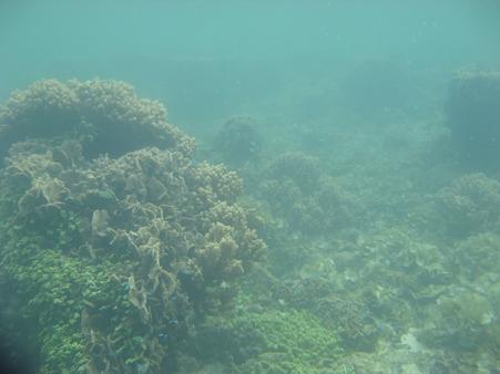相方撮影の熱帯魚19