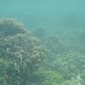 写真: 相方撮影の熱帯魚19
