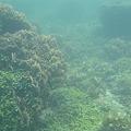 写真: 相方撮影の熱帯魚20