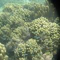 Photos: アルパット島近くで熱帯魚その22