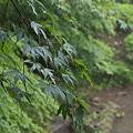 写真: 三渓園・庭園の中を流れる小川
