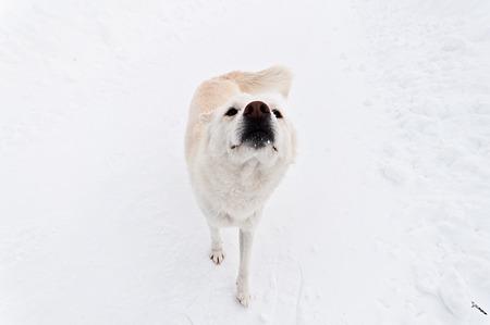 イヌです1