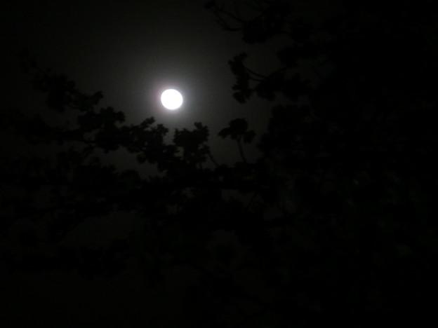 月明かりのみで お花見とお月見!